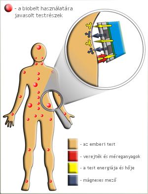 biobelt hatása a testben